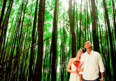 hutan-pinus